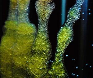 3d-bioprinting